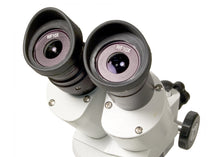 Eyepieces of the Levenhuk 3ST Microscope (SKU: 35321).