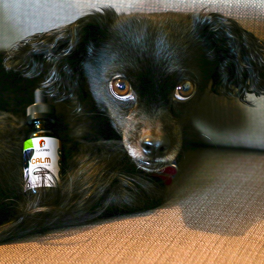 Full Spectrum CBD for Dogs