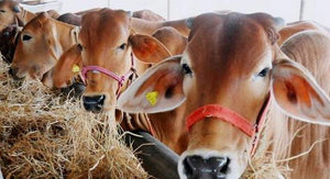 India and China to host IDF World Dairy Summits in 2022 and 2023