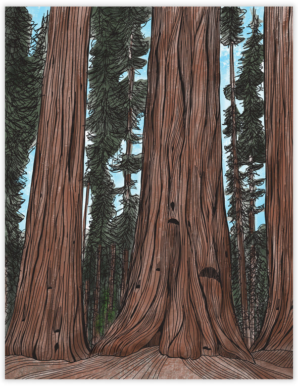 Sequoia Un-Boxed Set of 8 Notecards