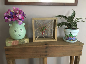 Air Plant Hanger made from reclaimed wood, Air plant display, Air Plant Holder
