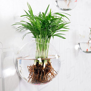 Wall Mounted Glass Vase Wall Hanging Planter Plant Flower Pot Small Plants Terrarium Home Decor, Bubble shape