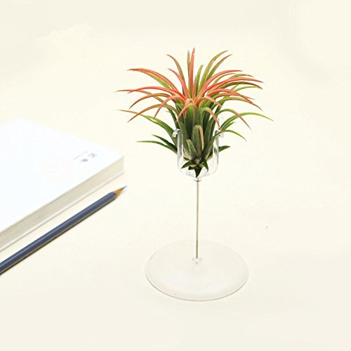 Air Plant Holder Air plants Pot Container Vase for Tillandsia Airplants Planter Indoor Decoration, with Acrylic Stand