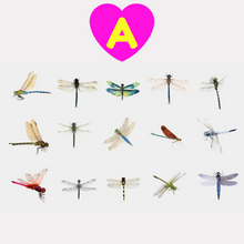 Dragonflies Stickers