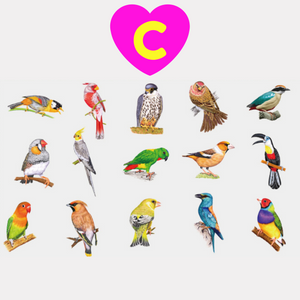Parrot Finch Sparrow Sticker