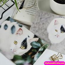 Beautiful Cats Cards