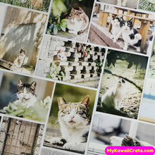 Cat Postcards