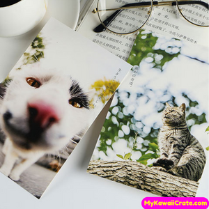 Cat Lover Post Cards