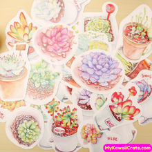 30 Pc Potted Succulent Plants Mini Postcards