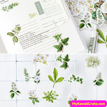 46 Pc Pack Gardenia Flowers Stickers
