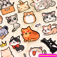 Funny Cats Stickers