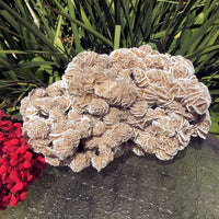 Gypsum Selenite Natural Desert Rose Specimen (5.98lbs)