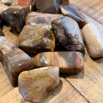 Madagascar Tumbled Petrified Wood
