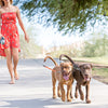 Image of Dual Dog Pet Leash