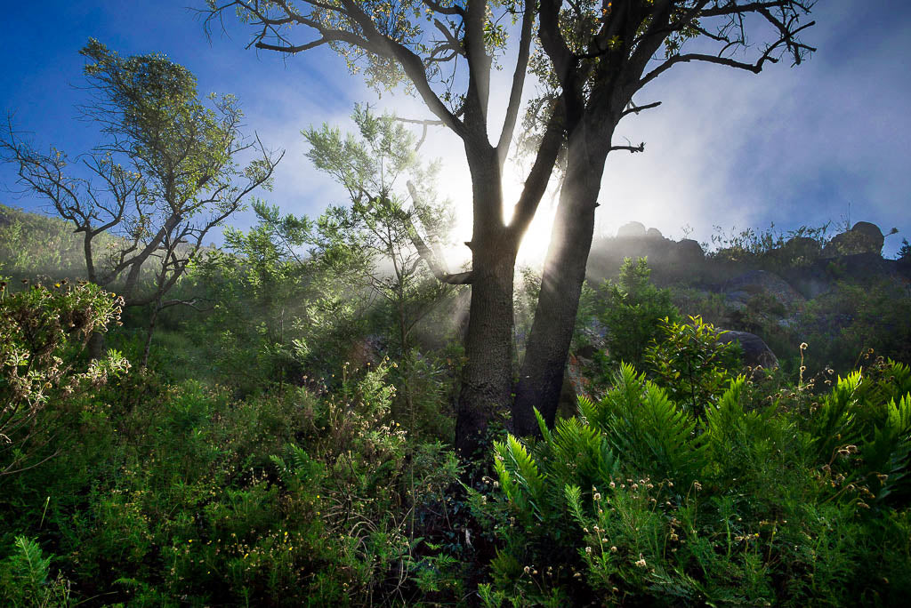 Colour photograph of Misty Langeberg Mountains in the Overberg