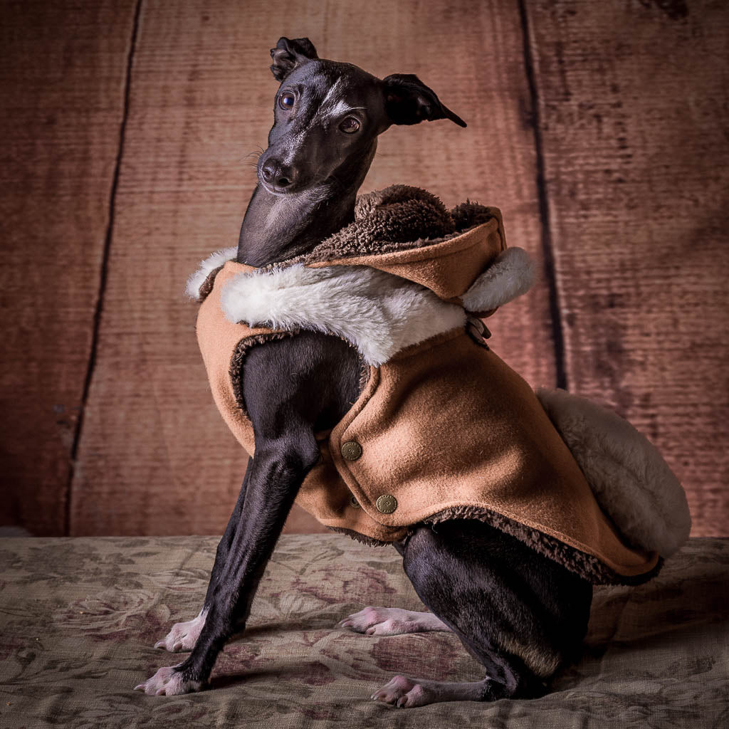 Portrait of Picolo - Pet Photography
