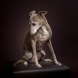 Portrait of Sassy - Pet Photography