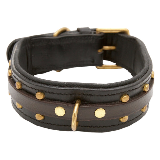 Black Dog collar with Brass Studs - DCD92