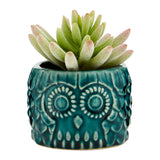 Small Succulent Blue Ceramic Owl Pot Fiori