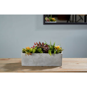 Mixed Succulents Cement Pot Fiori