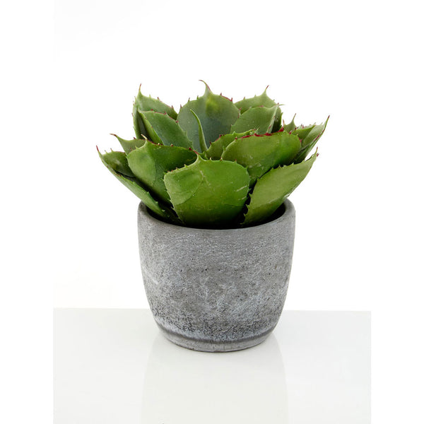 Large Succulent Cement Pot Fiori