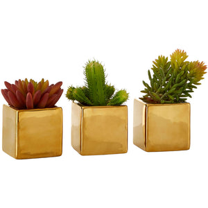 Set of 3 Mini Succulents Gold Ceramic Pots Fiori
