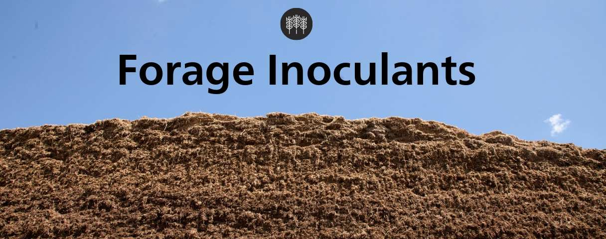 Forage Inoculants For Improved Fermentation, Digestibility & Stability