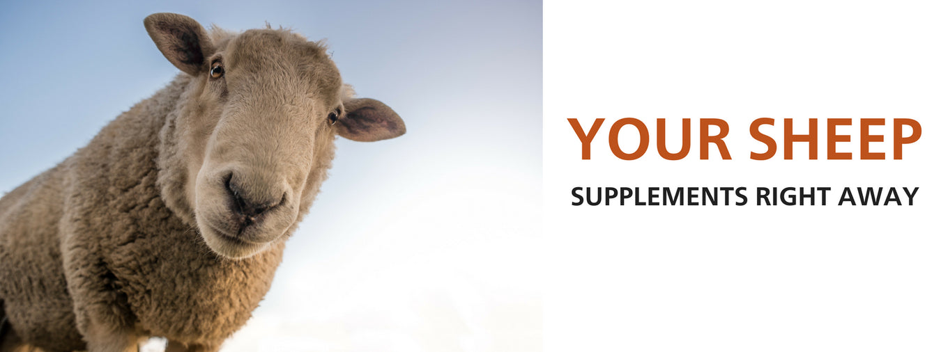 Nutritional Supplements for Sheep