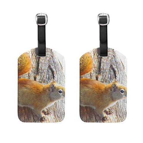 Luggage Tags Squirrel Animal Rodent Tree Womens Bag Suitcase Tags Holder traveling accessories 2