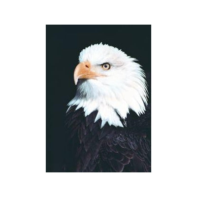 Animal Essences Eagle (adelaar) 30 ml