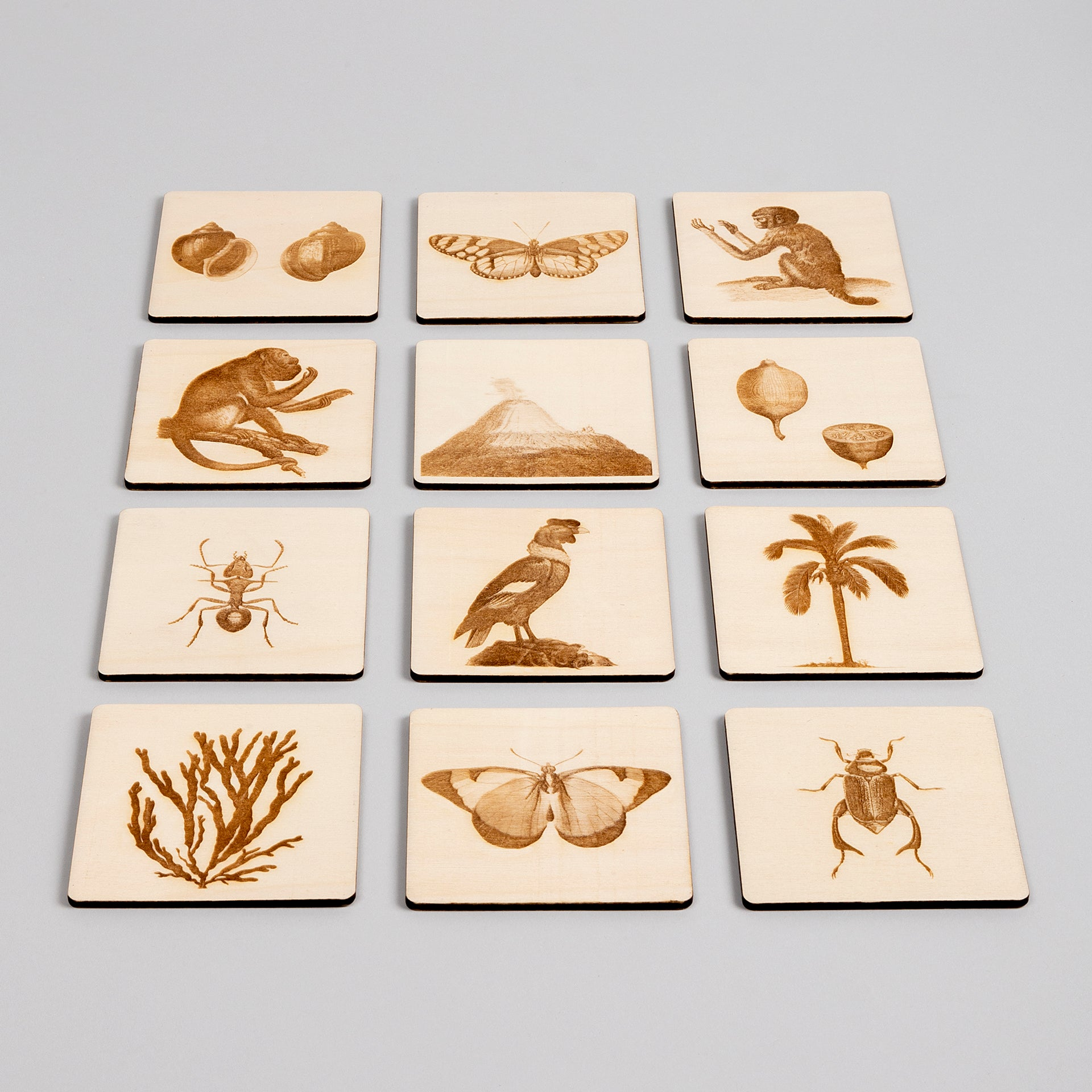 The Naturalist - frottage memory game