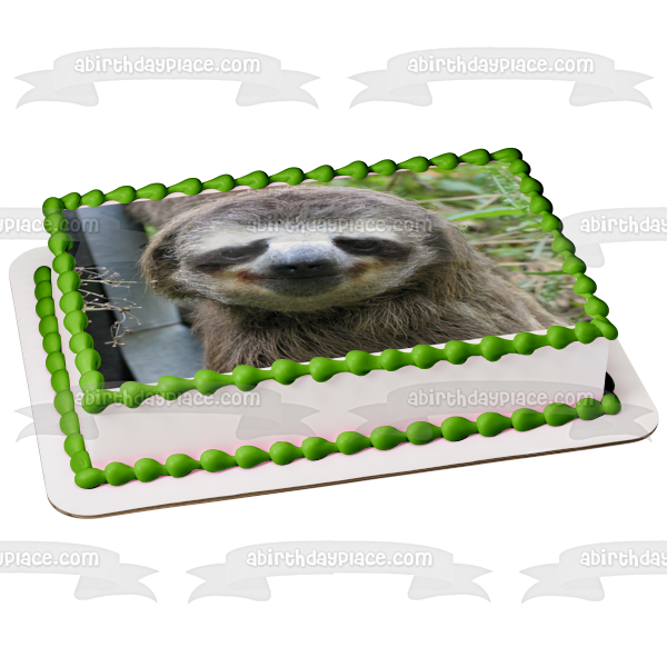 Sloth Smiling Edible Cake Topper Image ABPID49743