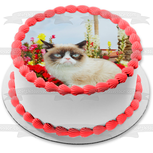 Grumpy Cat Flowers Sky Background Edible Cake Topper Image ABPID49809
