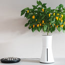 smart pot lifestyle lemon