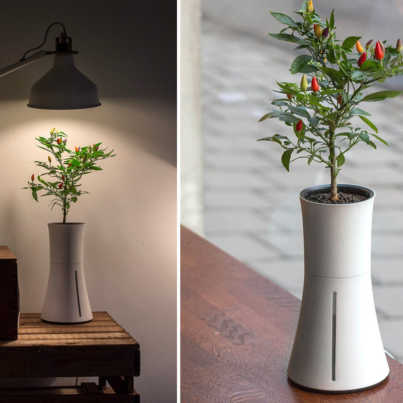 smart pot lifestyle under a lamp and by the window