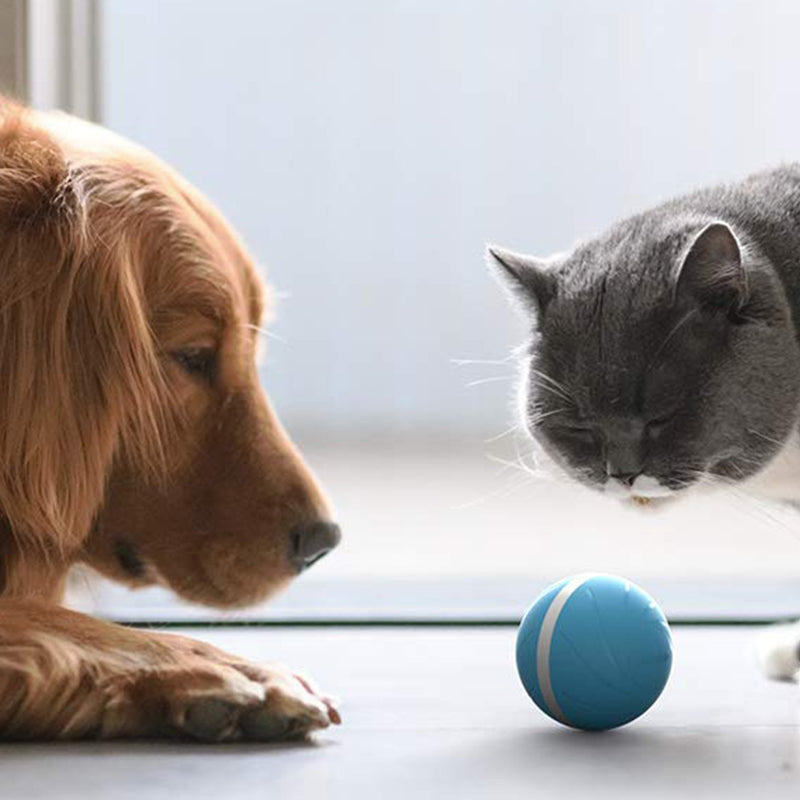 wicked ball lifestyle cat & dog