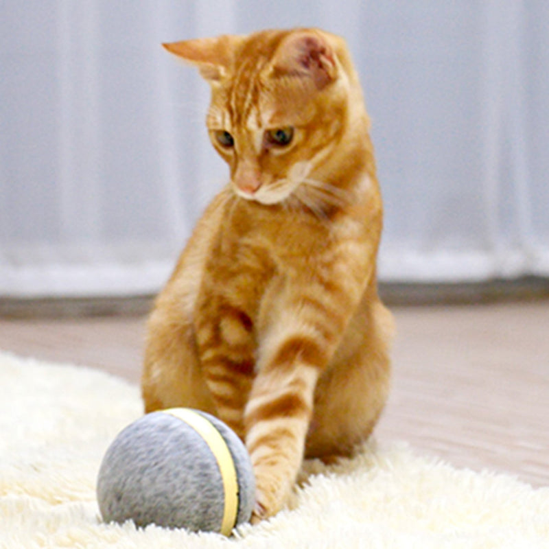 wicked ball lifestyle cat