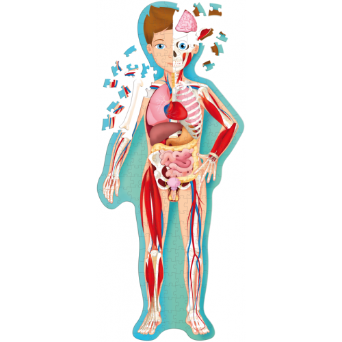 Learn and Explore Puzzle - Human Body