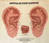 Auricular Therapy Pack