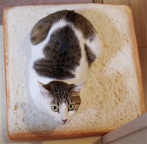 Creative Toast Bread Cat Bed