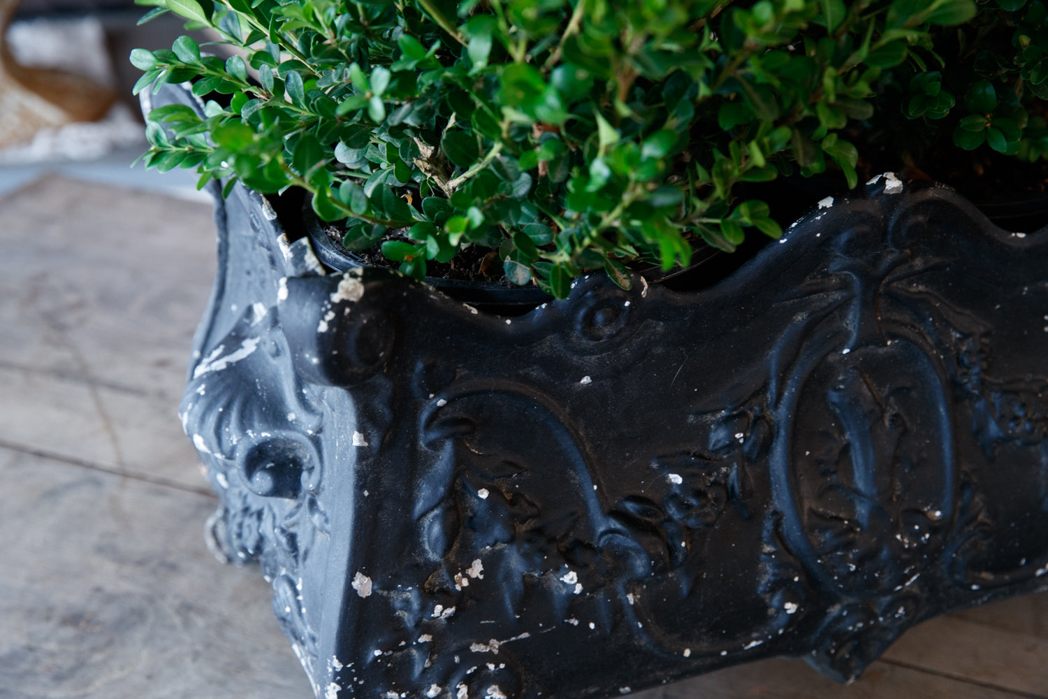 French Iron Jardinerie - Black Patina