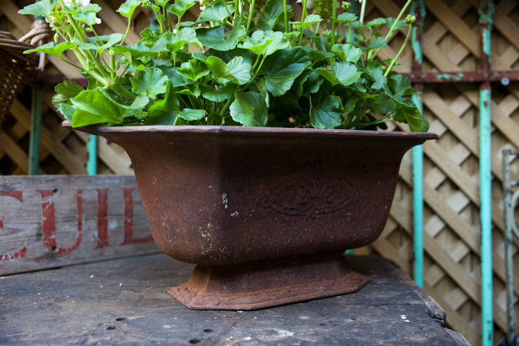 French Cast Iron Planter