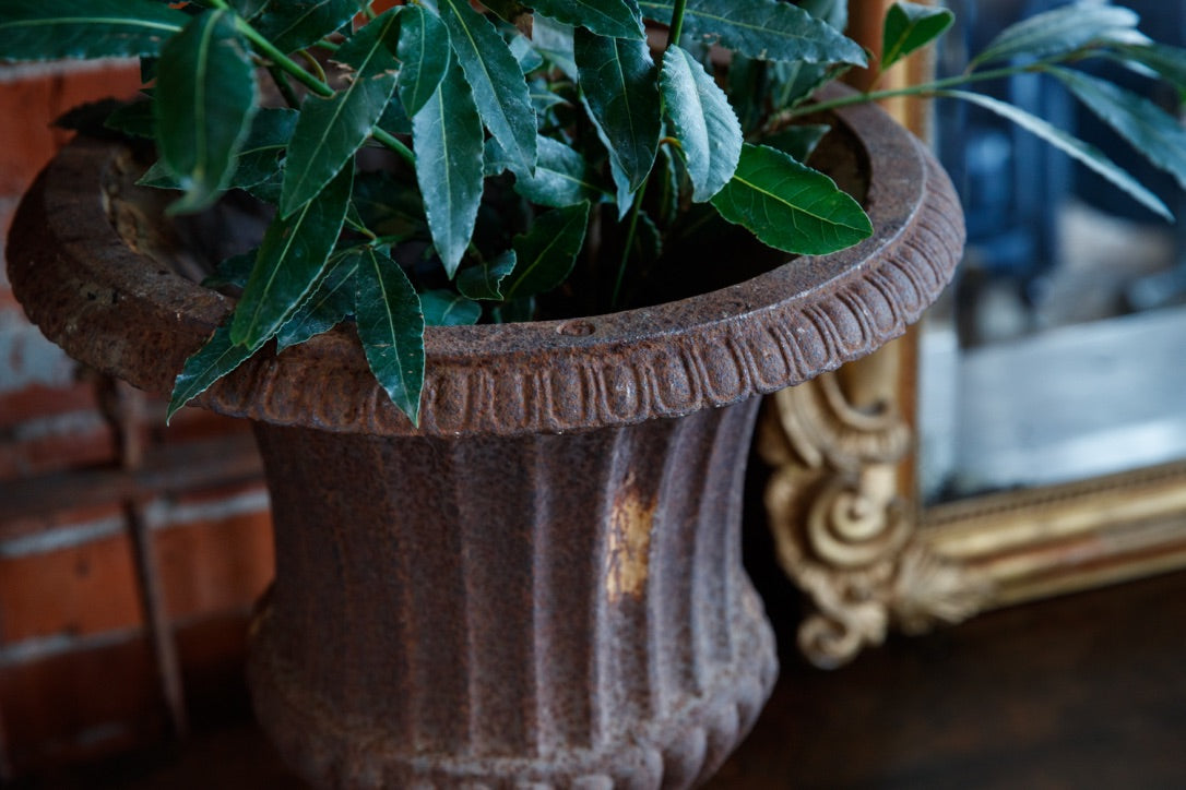 Gorgeous 19th Century French Cast Iron Urns
