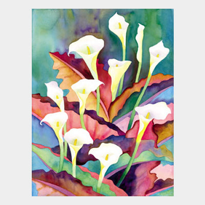 Jungle Calla Lily