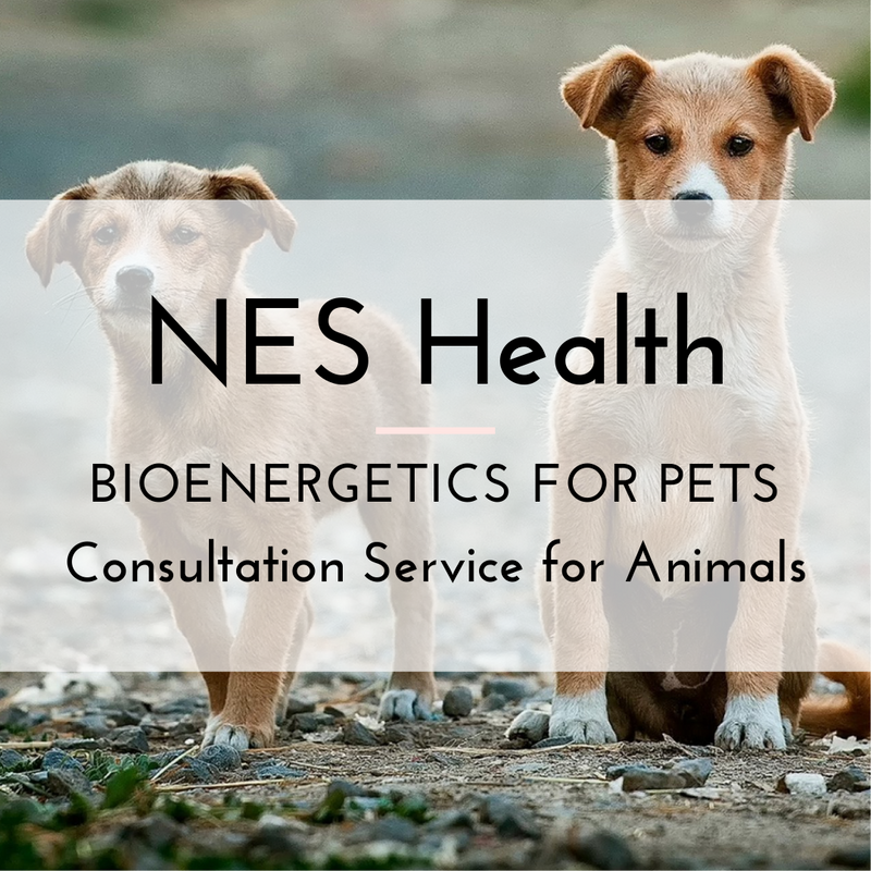 NES Health for Pets - Consultation with Scanner