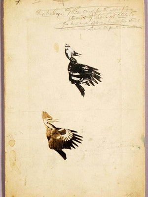 2 Rush Stencils, Study Folder For Book Concealing Coloration In The Animal Kingdom By Abbott Handerson Thayer