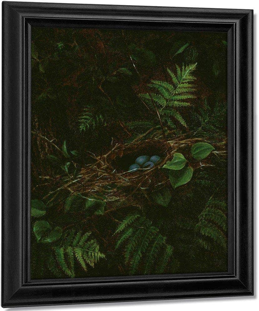 Bird's Nest And Ferns By Fidelia Bridges