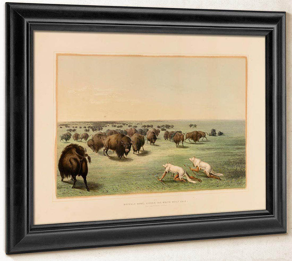 Buffalo Hunt, Under The White Wolfskin  No. 13 By George Catlin