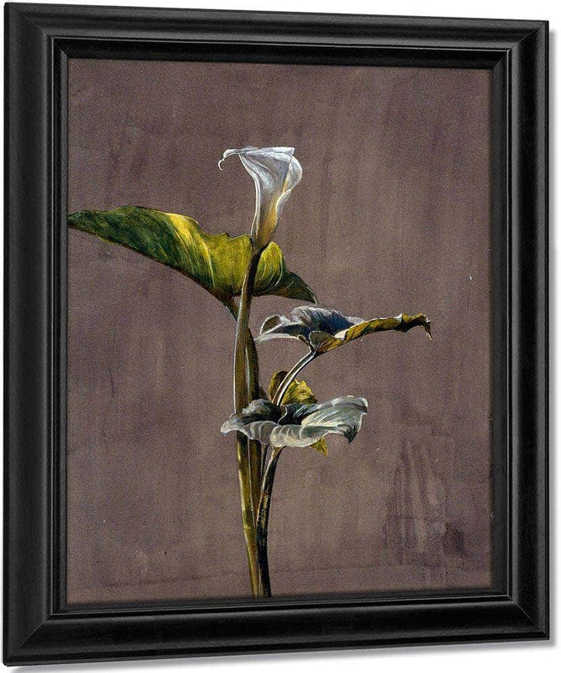 Calla Lily By Fidelia Bridges