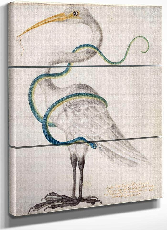 Heron Encircled By A Snake 1700 By Maria Sibylla Merian